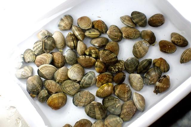 soaking the clams