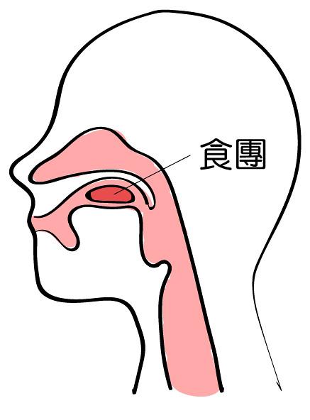 原來食物進到嘴巴到吞下去 需要經過這五個過程! – 語言治療資訊讚 LIKEST