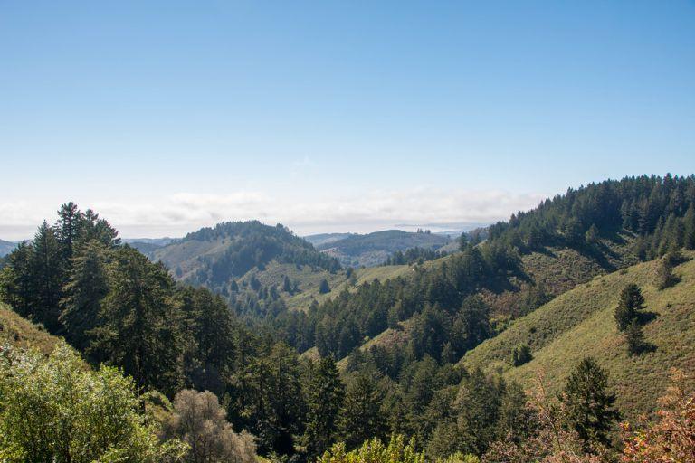 07.31. Purisima Creek Redwoods