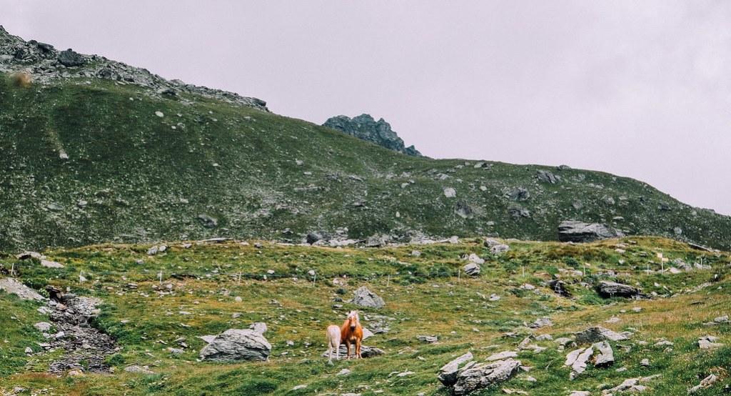Cavalli, Val d'Ayas