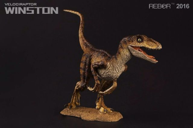 06 Raptor Rebor 2016 'Winston'
