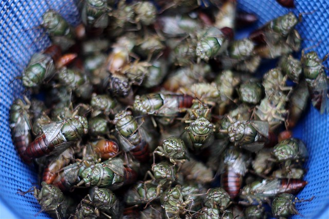 Cicadas at the Morning Market