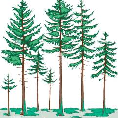 Deciduous Forest Layers Diagram Wiring For 2 4 Ohm Dvc Subs Vegetation Profile Of A Boreal The Tree Layer