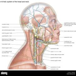 Diagram Of Lymph Nodes In Neck And Head Ge Gas Dryer Wiring The Lymphatic System Helps Defend