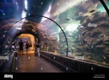 Las Vegas Aquarium Mandalay Bay Hotel