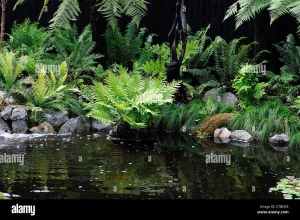 Fern Garden Mixed Shade Shady Loving Plants Water
