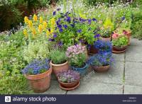 Patio with summer flowering perennial plants in border and ...