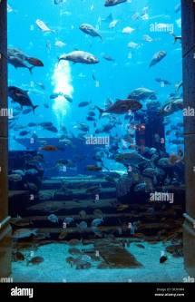 Aquarium In Atlantis Hotel Palm Jumeirah Dubai
