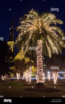 Palm Tree With Christmas Lights And Citadel Square Baptist