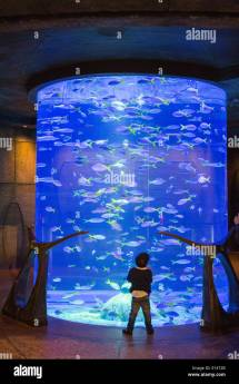 United Arab Emirates Dubai Aquarium In Atlantis Hotel