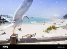 Seagull Flying Over Rodas Beach Cies Islands Vigo