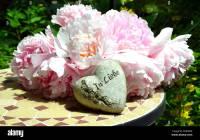 Love Garden Peonies Shabby Chic Flowers Stock Photo ...