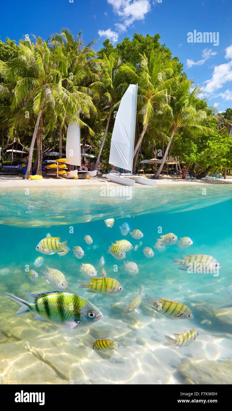 Half Beach Underwater Background Island
