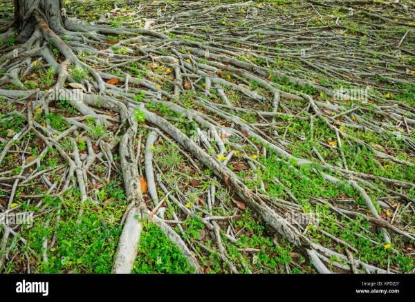 Tree Root Network Stock &