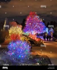 Christmas Tree And Lights Garden Stock Photos & Christmas ...