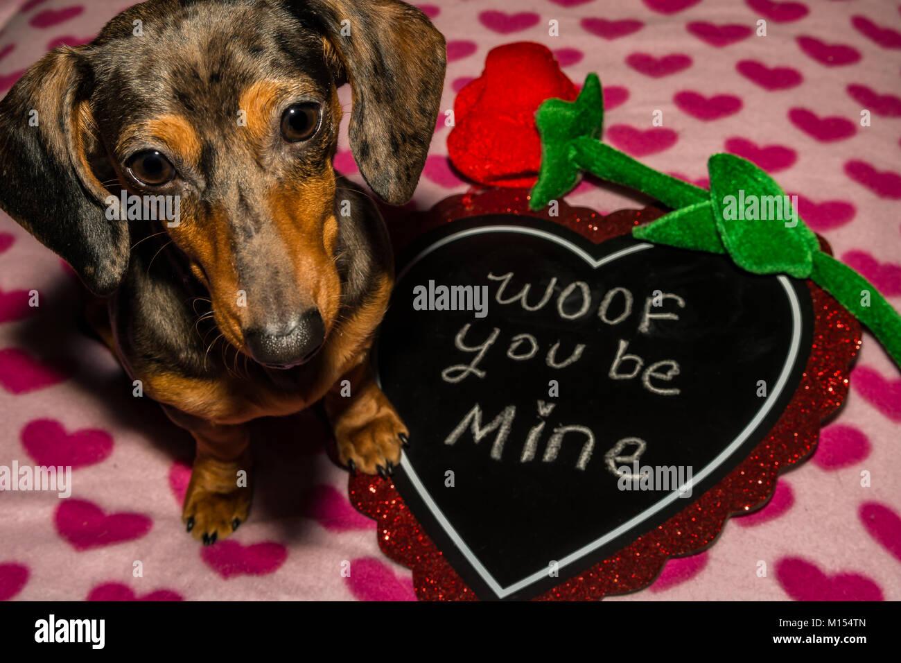 Pup Puppy Dog Flower Stock Photos Amp Pup Puppy Dog Flower