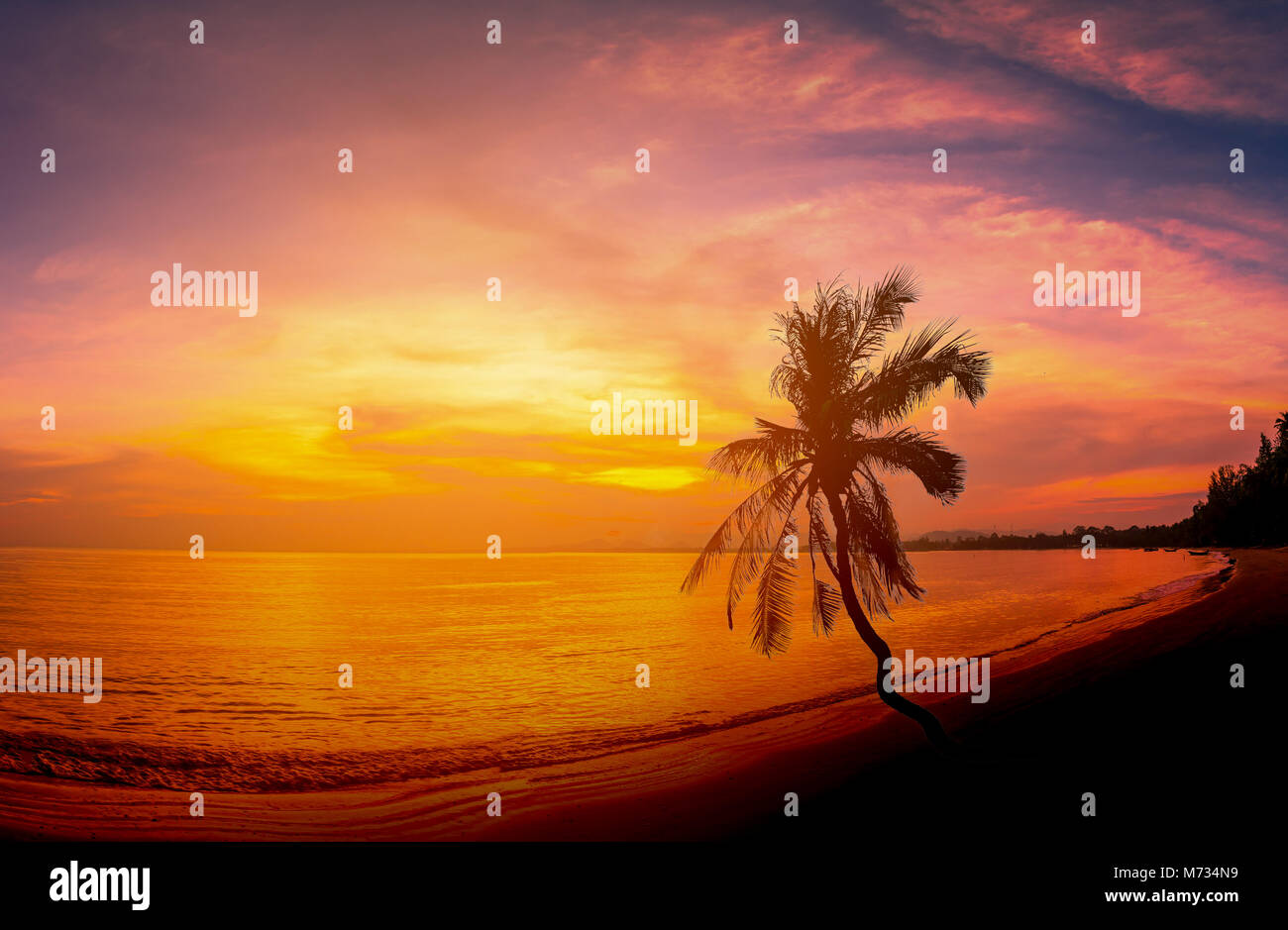 Coconut Forest Stock Photos & Coconut Forest Stock Images