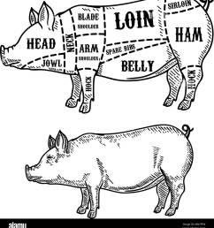 pig arm diagram wiring diagram pig arm diagram [ 1236 x 1390 Pixel ]
