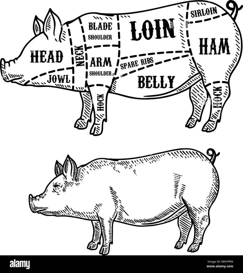 medium resolution of pig arm diagram wiring diagram pig arm diagram