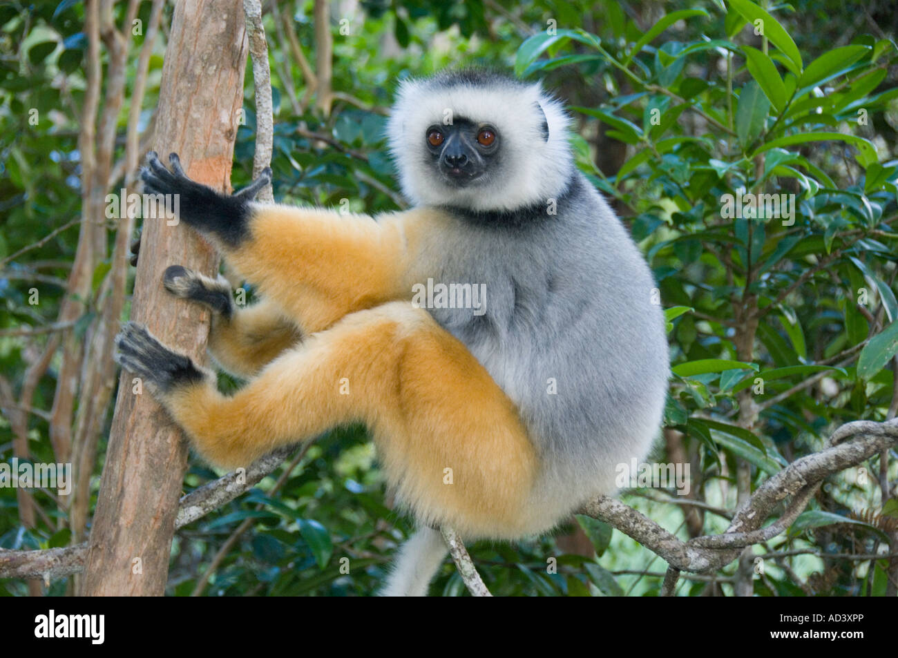 Zoo Palast Roter Teppich Primates Stockfotos And Primates Bilder Alamy