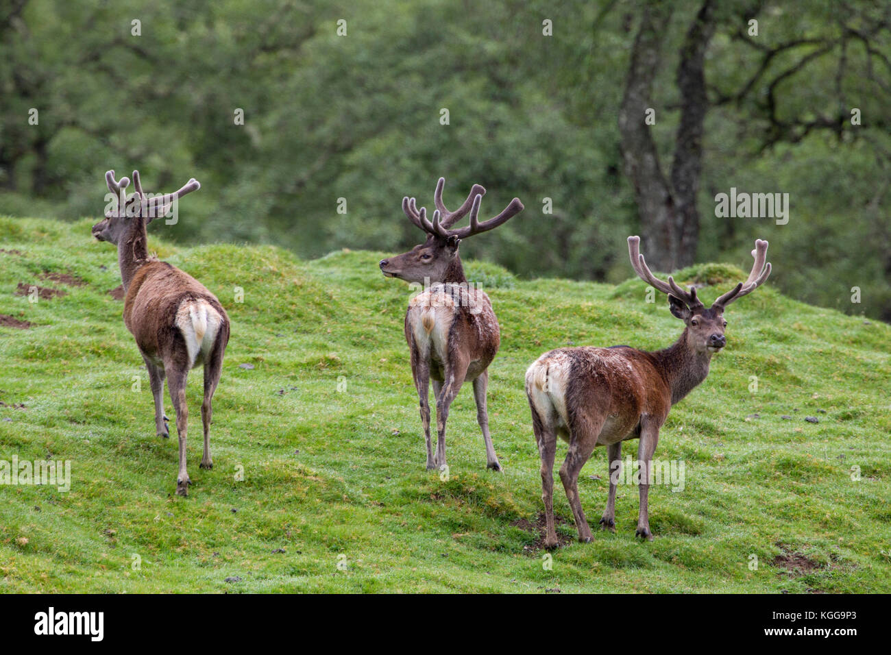 Der Magische Findhorn Garten Males Stockfotos And Males Bilder Alamy