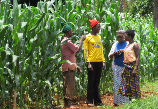 Siza Mkini's farm is now a village attraction. Her fellow farmers in Kitowo village frequently visit her farm to 'take a look' at what she does that makes it so productive.