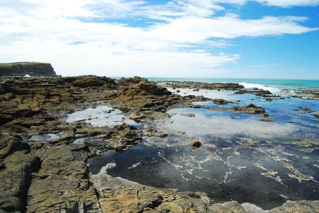 Petrified fossils Curio Bay NZ