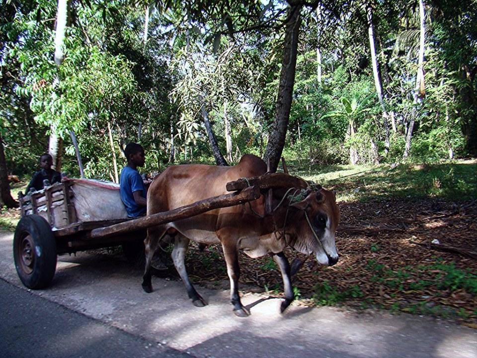 medios de transporte Zanzibar Tanzania 04
