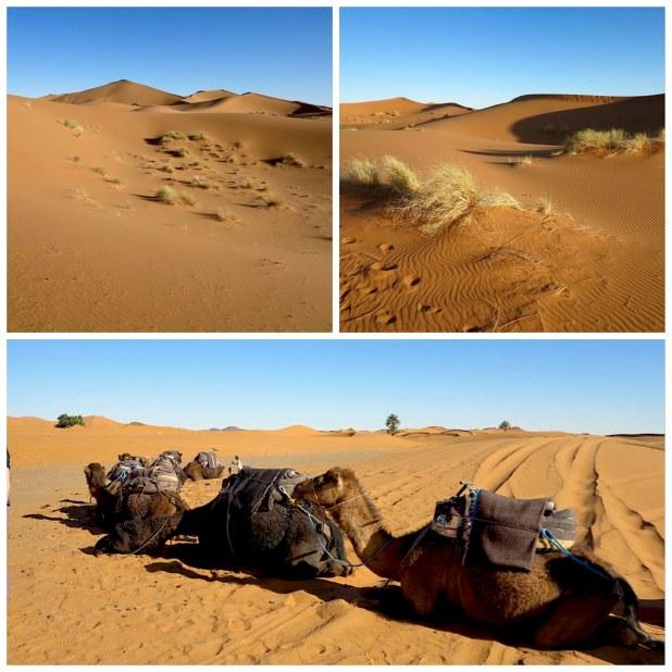 Paseo por el desierto de Merzouga