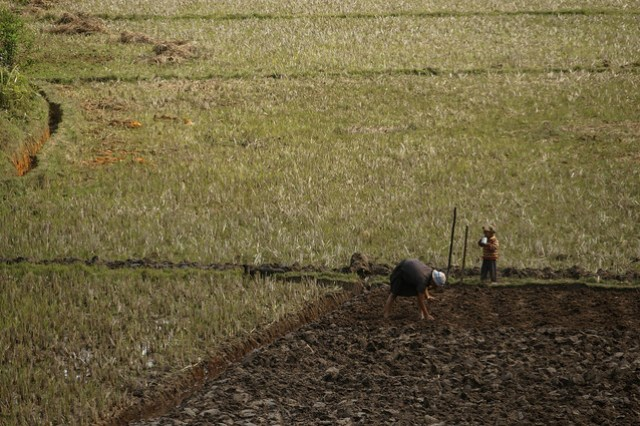 Mother and Son Planting Rice