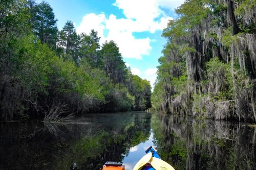 Lowcountry Unfiltered at Okefenokee-094
