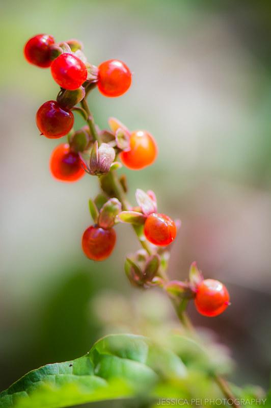 Arbor Hills Nature Preserve Berries