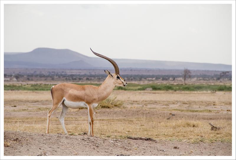 Amboseli-42