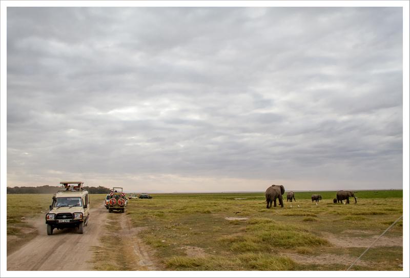 Amboseli-66