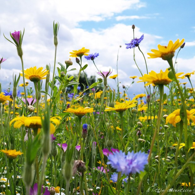 What a summer - Meadow