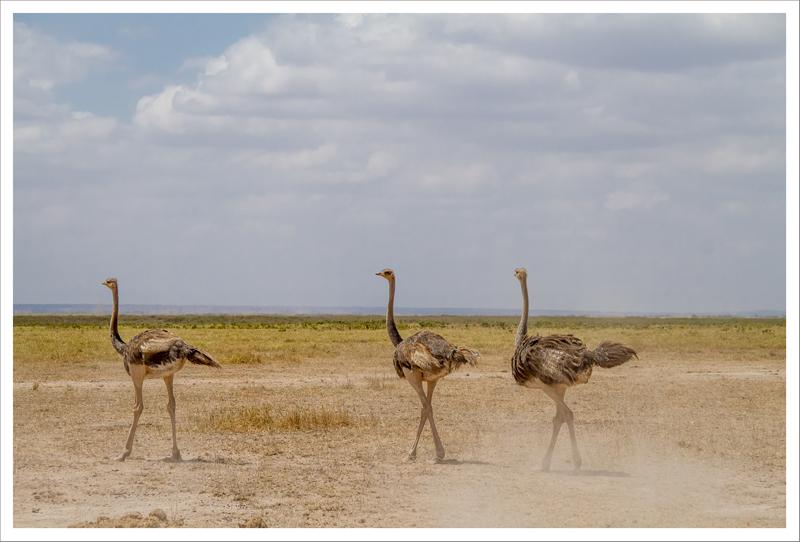 Amboseli-136