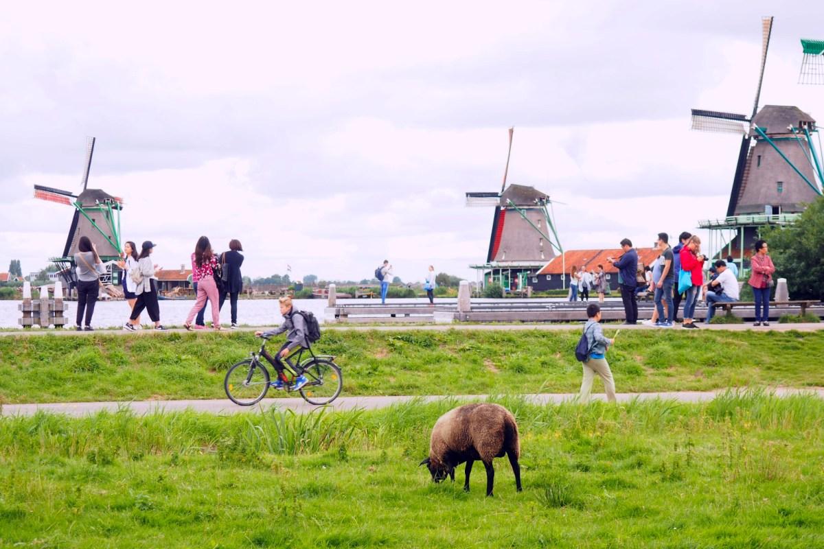 Amsterdam con Perro, Amsterdam con Mascotas Amsterdam con perro Visitar Amsterdam con perro 29397498686 f2df262d50 o