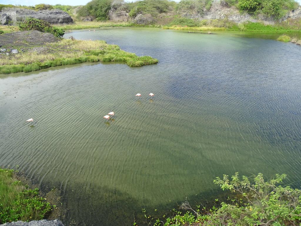 Laguna Flamingo Isla Isabela Parque Nacional Galapagos Ecuador 03