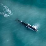 Sortie Avion Baleines et dauphins