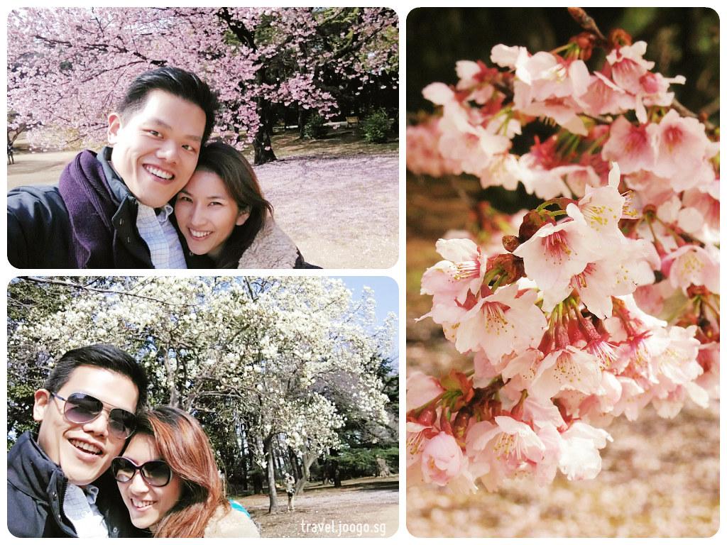 Shinjuku Gyoen Spring Sakura 1 - travel.joogo.sg