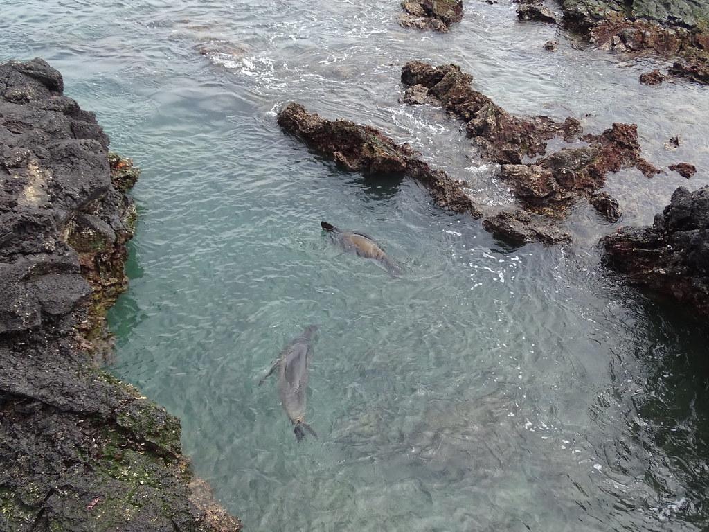 Fauna Isla de San Bartolome Parque Nacional Galapagos  Ecuador 03