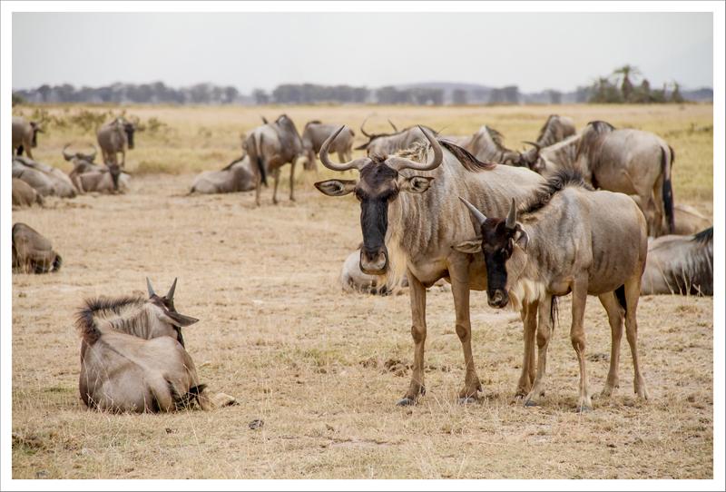 Amboseli-34