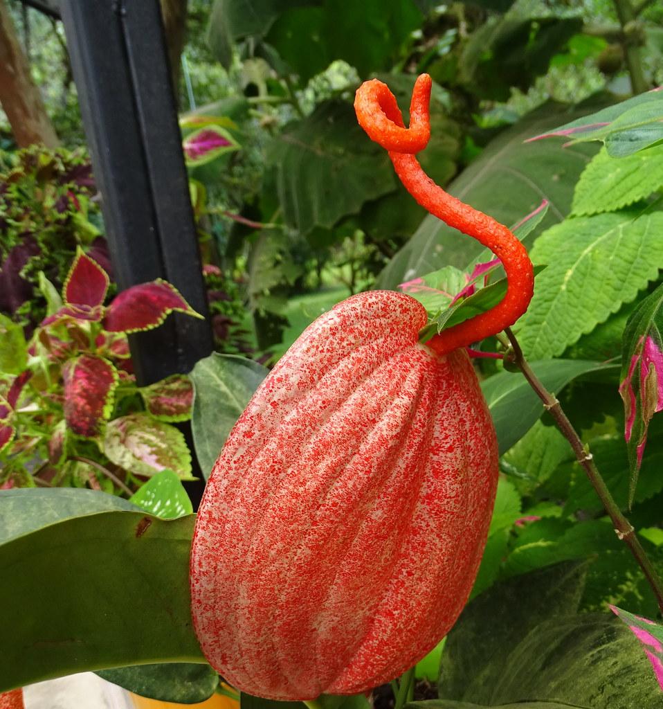 Flores Baños de Agua Santa Ecuador 13