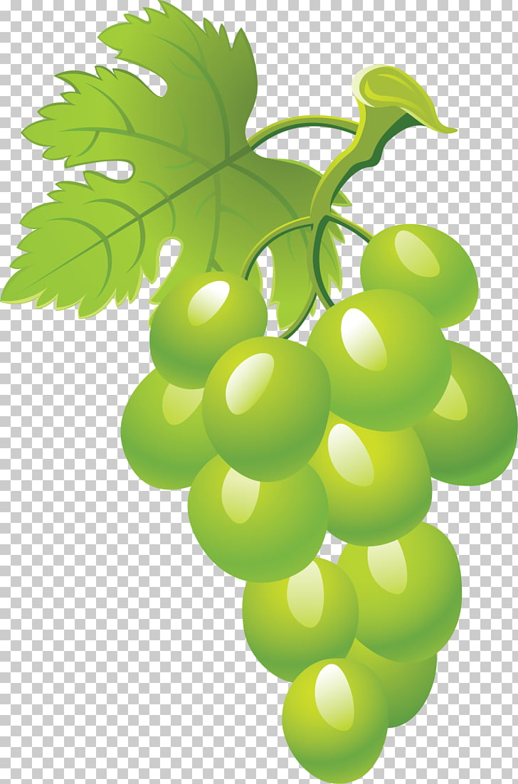 hight resolution of common grape vine fruit grape png clipart