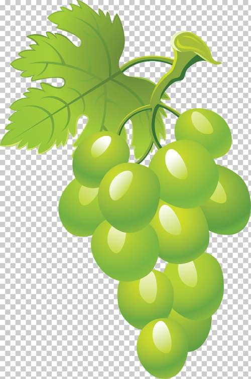 small resolution of common grape vine fruit grape png clipart
