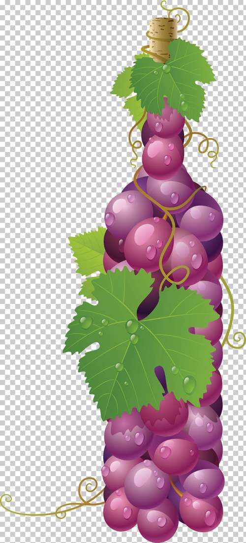 small resolution of wine common grape vine art painting red grape png clipart
