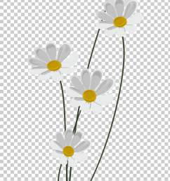 chamomile common daisy information chamomile png clipart [ 728 x 1117 Pixel ]