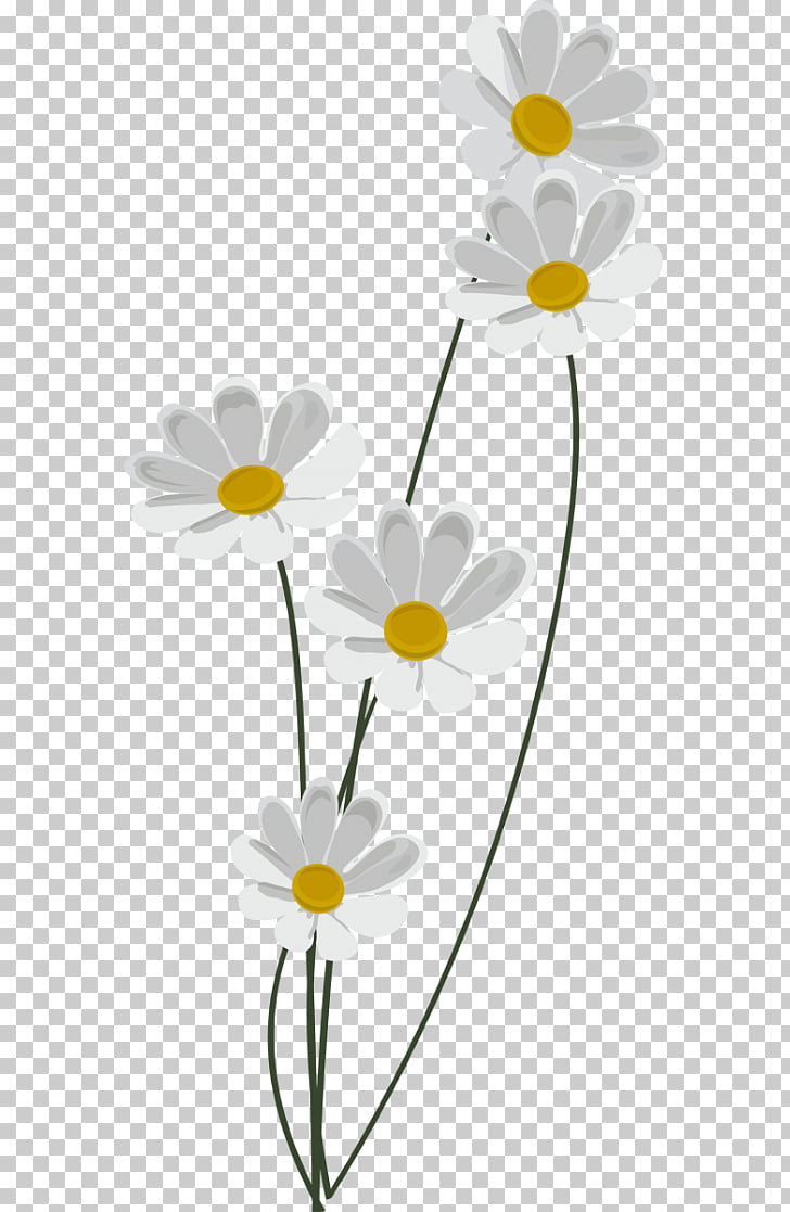 medium resolution of chamomile common daisy information chamomile png clipart