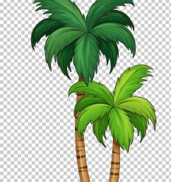 arecaceae illustration coconut tree png clipart [ 728 x 1142 Pixel ]