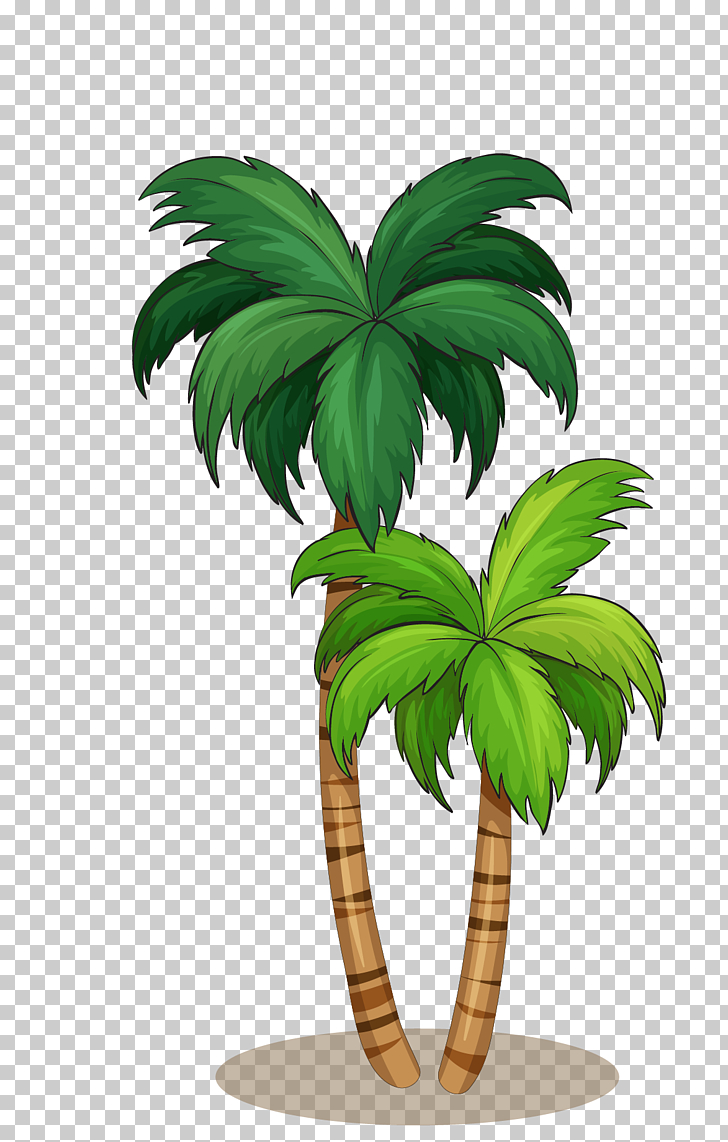 hight resolution of arecaceae illustration coconut tree png clipart